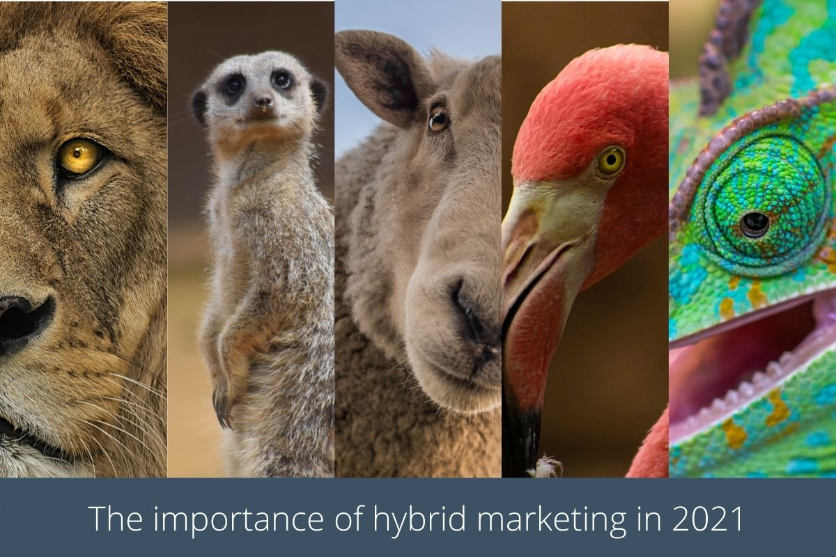 The importance of hybrid marketing in 2021